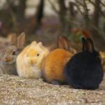 大久野島のうさぎは、冬場は冬眠しませんが、うさ饅頭になって集まっているときは冬眠と同じ状態になってますのでゆっくり休ませてあげてください。